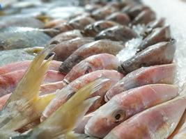 närbild rå färsk fisk kyla på is i skaldjur marknad bås foto