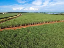 grönt sockerrör fält på Sao Paulo delstaten, Brasilien foto