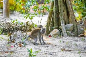 makakapa i tropisk djungelskog i Koh Phayam, Thailand foto