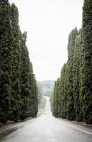 cypress gränd foto