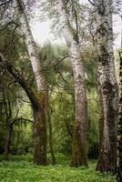 grön mossa på ett gammalt träd foto