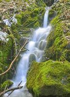 dansande vatten i vildmarken foto