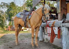 brun häst med tyglar som står på gården foto