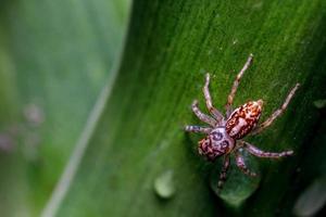 närbild av spindel på ett blad foto