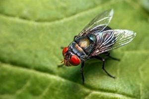 närbild av flugor på ett blad foto