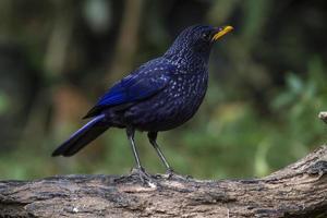 fågel i naturen foto