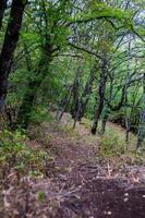 landsbygden i Kaukasus bergslandskap foto
