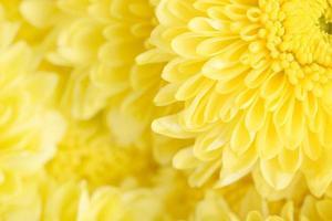 närbild blommar färgen på den fina blomman foto