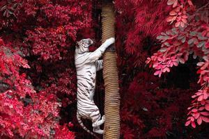 vita tigrar klättrar i träd i djurparkens vilda natur. foto