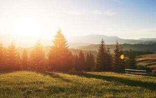 vackert sommarbergslandskap vid solsken. utsikt över ängsstängslat staket och kor som betar på det foto