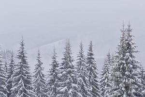 fe vinterlandskap med granar och snöfall. jul hälsningar koncept foto