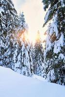 granar på vintern fyllda med snö foto
