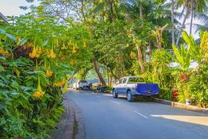 luang prabang, laos 2018- tropiska naturliga gator i staden luang prabang i laos foto