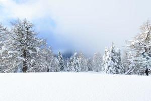 fe vinter snöigt landskap på de italienska alperna foto