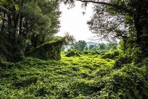 2021 07 25 förnya lagoskogen mellan sjöarna foto
