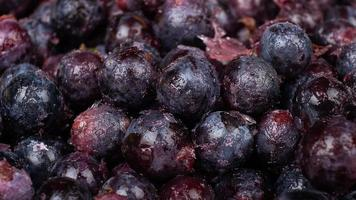 frysta druvor bakgrund närbild, mörkblå druvor från kylskåpet foto
