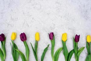 en rad med gula och lila vårtulpanblommor mot en ljus stenbakgrund. platt låg. kopiera utrymme. mors dag. internationella kvinnodagen. foto