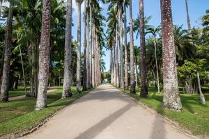 Rio de Janeiro, Brasilien, 2015 - Botanisk trädgård i Rio de Janeiro foto