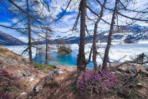 tina i höga berg med vårblommor och halvfrysta sjön, engadine valley nära sankt moritz foto