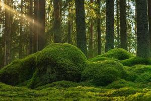 gammal älvskog med grön mossa som täcker golvet foto
