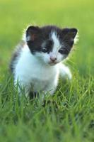 baby kattunge utomhus i gräs foto