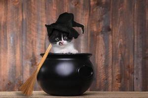 bedårande kattunge klädd som en halloweenhäxa med hatt och kvast i kittel foto