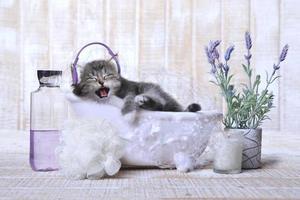 söt bedårande kattunge i ett badkar avkopplande foto