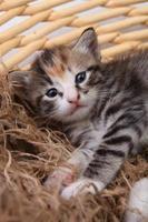 nyfödd kattunge i en korg foto