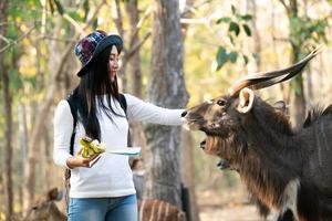 kvinna som tittar och matar djur i zoo foto
