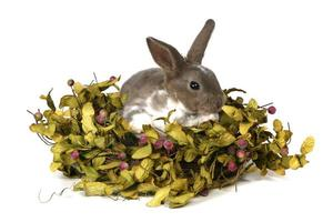 bedårande kanin i folie på vit bakgrund foto