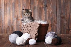 söt kattunge med garnbollar foto
