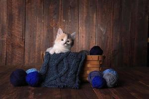 söt kattunge i studion foto
