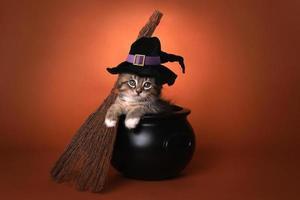 söt kattunge med halloween -häxa foto