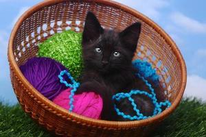 bedårande kattunge i ett fodral fyllt med garn foto