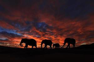 vacker silhuett av afrikanska elefanter vid solnedgången foto