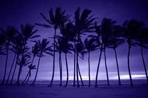 lila silhuett av höga palmer foto
