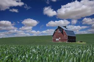 solsken och röd ladugård på fälten i palouselandet foto