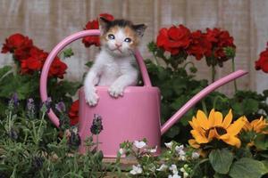 söt 3 veckor gammal kattunge i trädgårdsmiljö foto