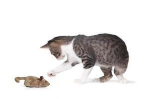 rolig katt och falsk mus foto