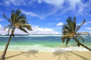 ön pardise beach i hawaii foto