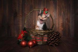 jultema calico kattunge inställd på trä bakgrund foto