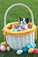 bedårande kattungar i en semester påskkorg foto