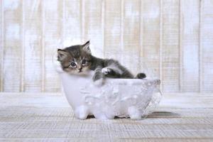 kattunge som slappar i ett badkar med klofot med bubblor foto