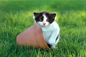 liten kattunge utomhus i naturligt ljus foto