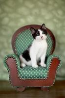 liten kattunge sitter i en stol foto