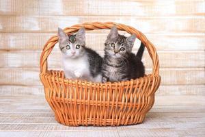 två adoptiva kattungar i en korg foto