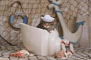 kattunge på havstemanbakgrund foto
