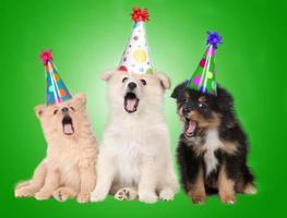 sjunger födelsedagvalphundar foto
