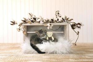 kattunge med nallar och bomullsspiror foto