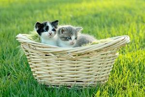 kattungar utomhus i naturligt ljus foto